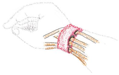 前腕の筋・腱